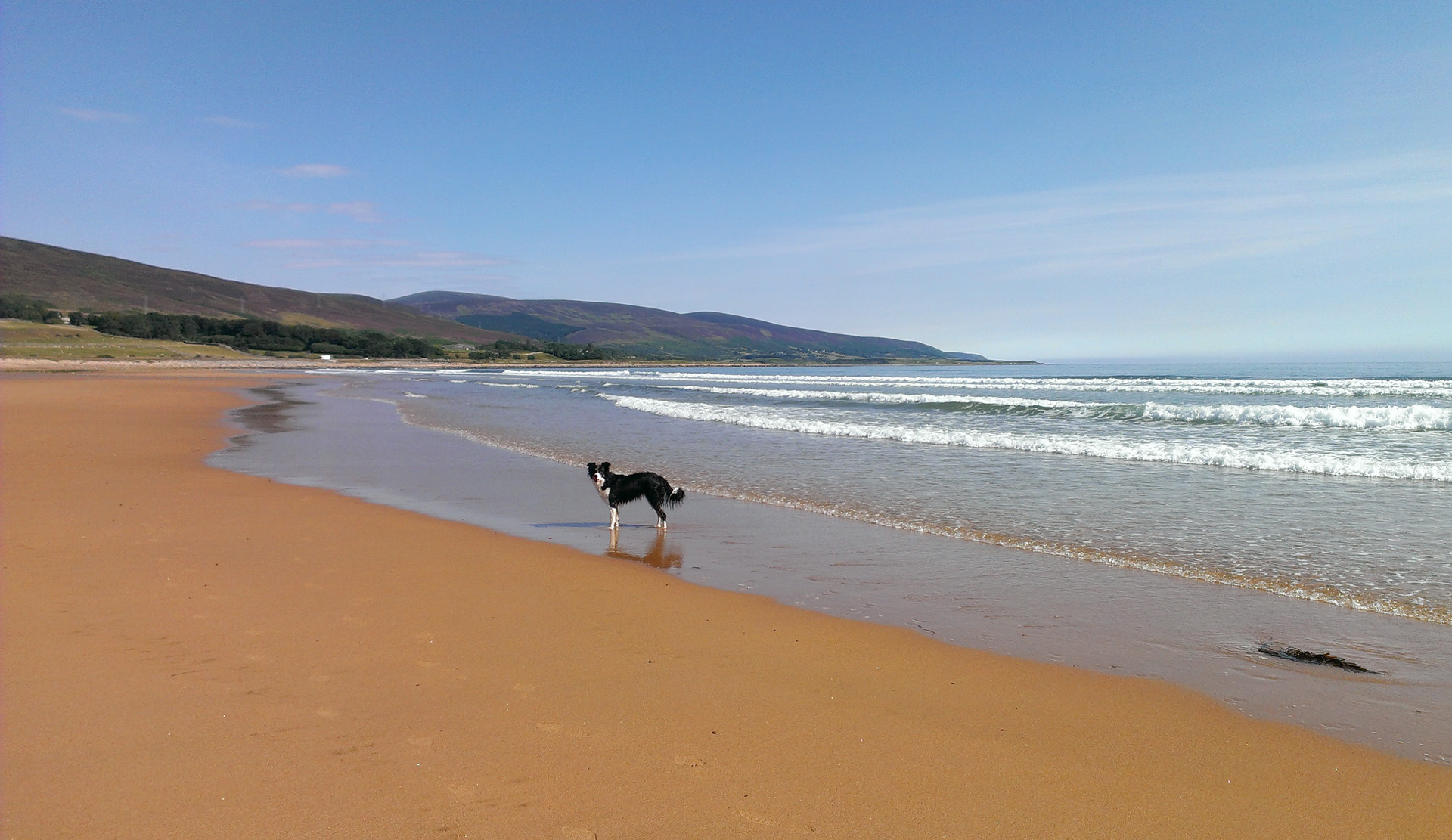 dog fredinly beaches near helmsdale hostel